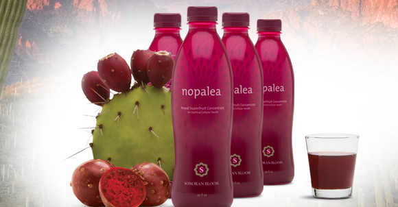 TriVita Loses on NOPALEA Trademark